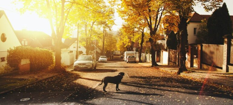a dog standing in the street with the sunshine on the horizon in one of the best Virginia suburbs for big families