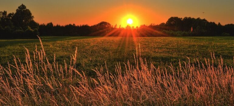 a wheat field with the sunset on the horizon